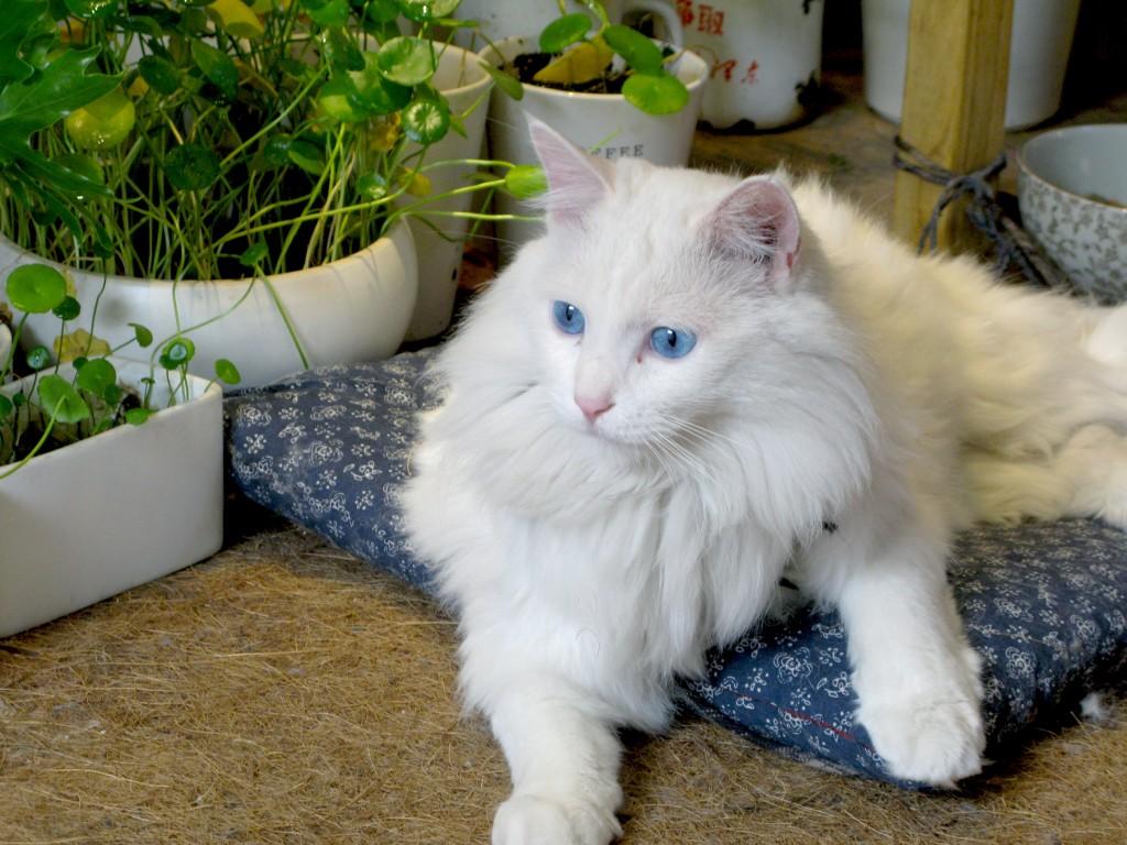壁纸 动物 狗 狗狗 猫 猫咪 小猫 桌面 1024_768