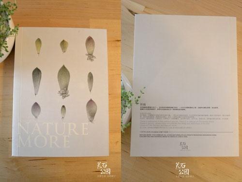手绘素描多肉植物