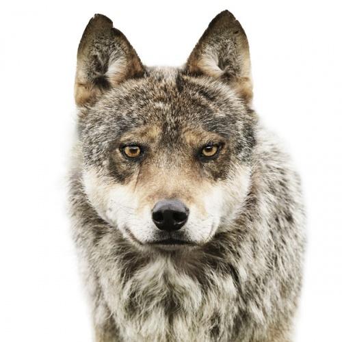 囧囧大自然,动物也有证件照