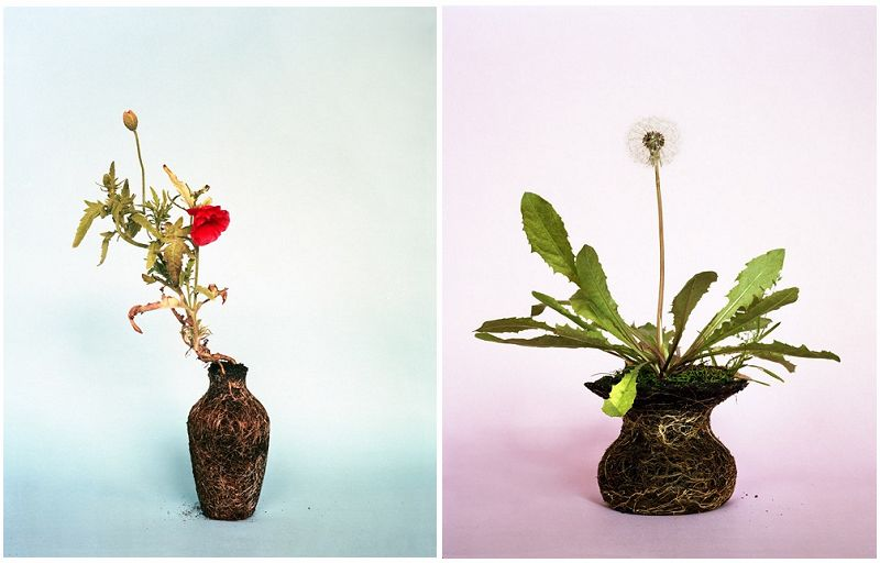 花瓶与花的简笔画图片